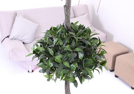 仿真植物引领时尚景观装饰潮流