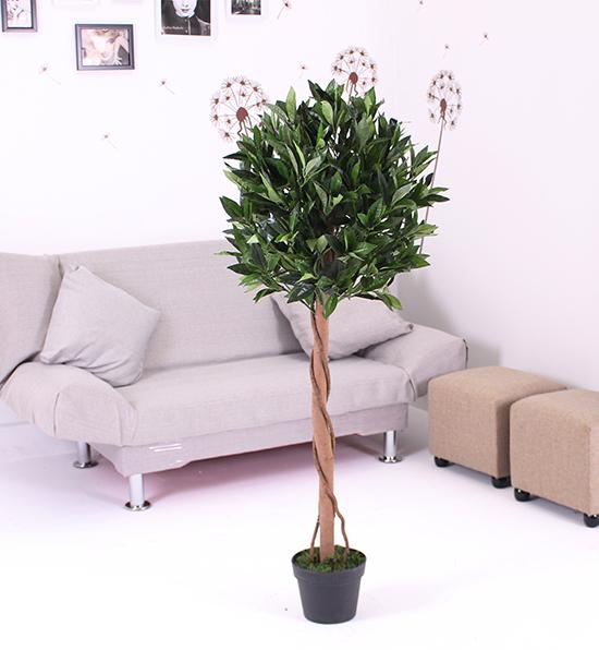 单杆月桂树(小)