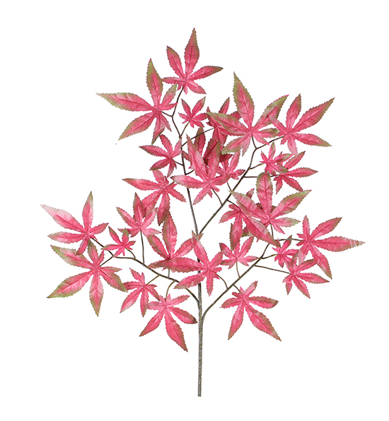 红底羽毛枫
