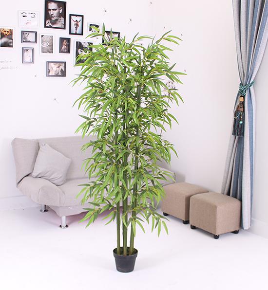 六叉四季竹