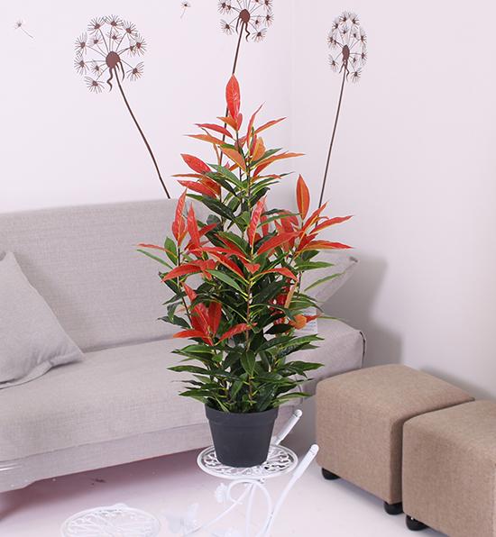 0.8米盆栽红叶