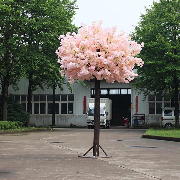 3米单杆樱花