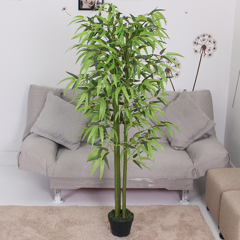 四叉四季竹