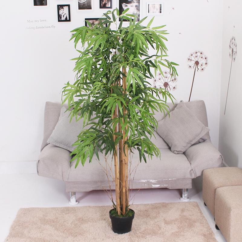 1.5米中号竹