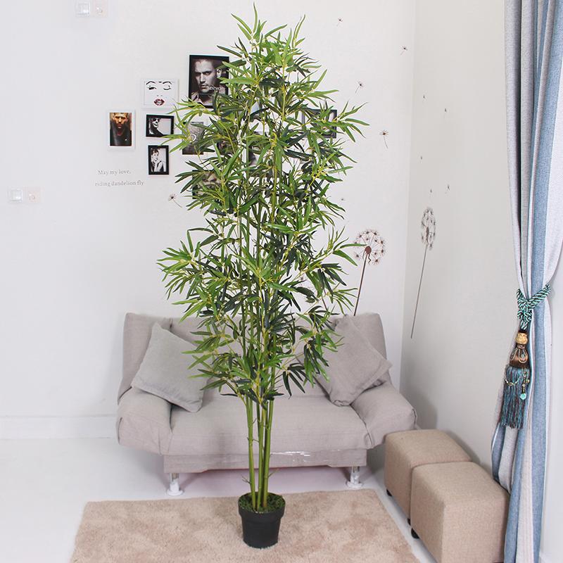 2.1米金竹