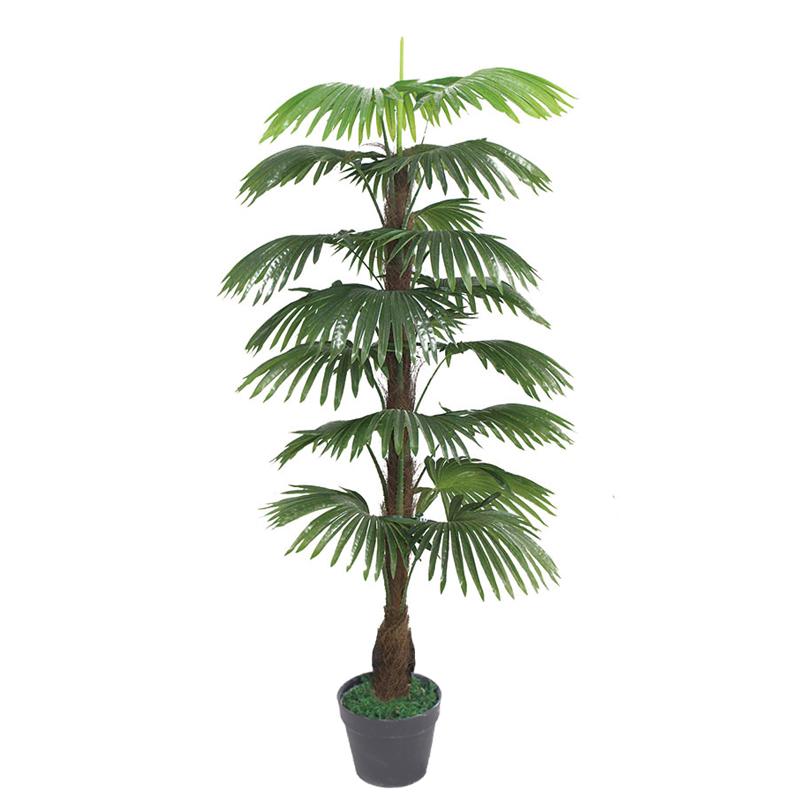 新五尺包棕扇葵
